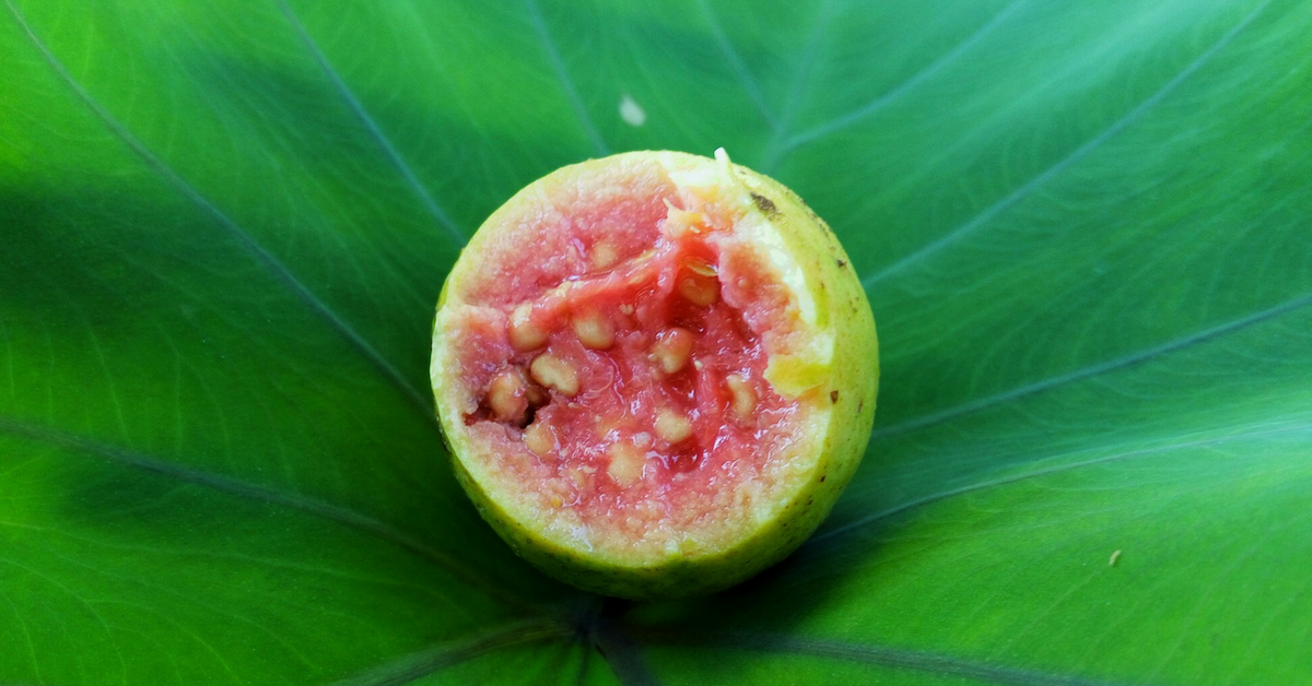 Exotic Tropical Fruits - Guava